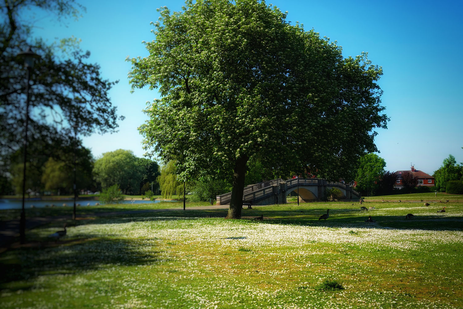 East Park in Hull.