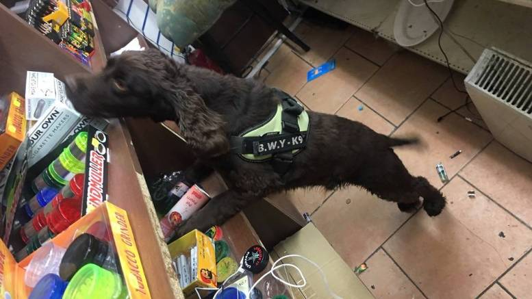 Yoyo the sniffer dog, who helped track down £11,000 in contraband.