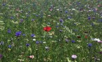 Wildflowers in Hull last spring.