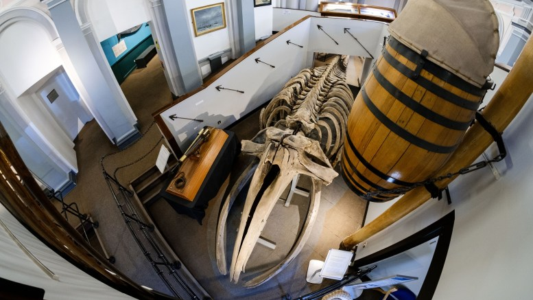 A whale skeleton at Hull Maritime Museum