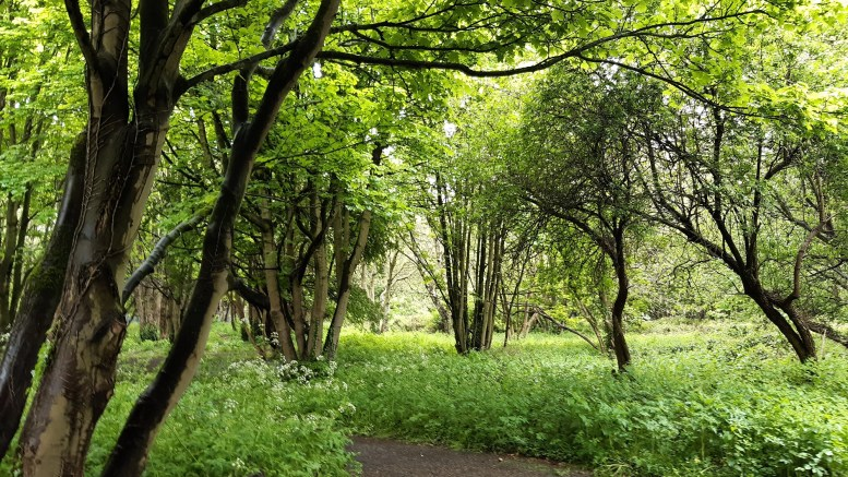 A green wooded area