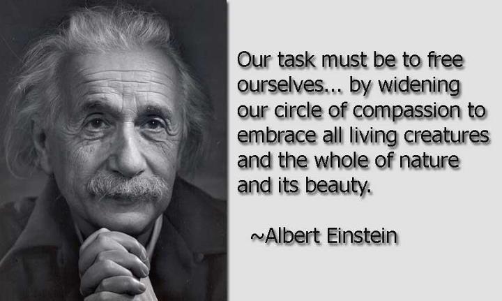 Albert Einstein Said Man Was Not Born To Be A Carnivore
