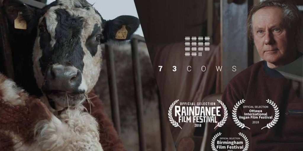 Image result for 73 cows