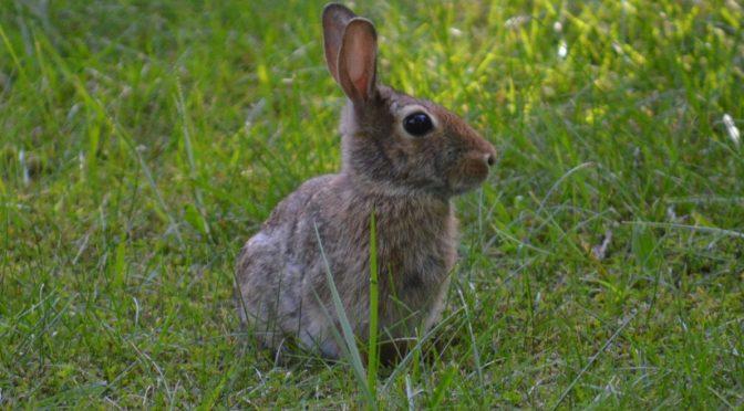 Gardening with Rabbits - Humane Gardener
