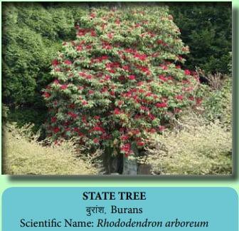 State Tree Of Uttarakhand Buransh