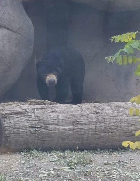 bear at el paso zoo