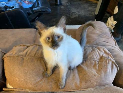 cat adoption - cute cat