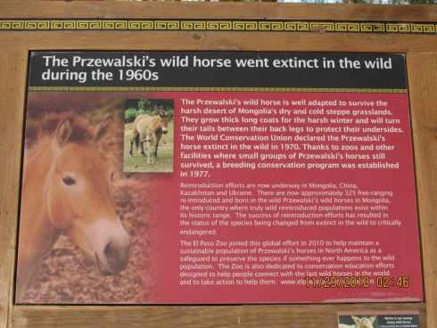 wild horse sign el paso zoo