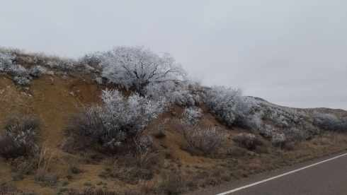 Frosted Bushes in Big Bend National Park