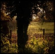 automne_08_011213
