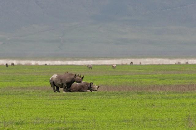 Die einzigen zwei Nashörner waren leider sehr weit weg