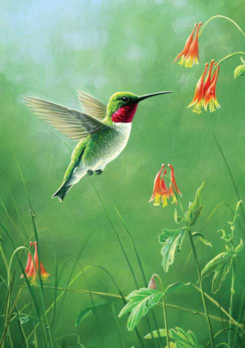 Hummingbird Greeting Cards The 1 Eco Friendly Cards