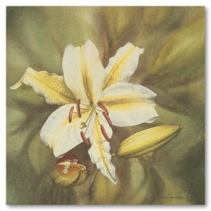 Hummingbird Gallery Les-Weisbrich-Day-Lily-Lilium-Lilaceae-1-Image Les Weisbrich <p>Flower Series<p>Limited Editions Currently Available