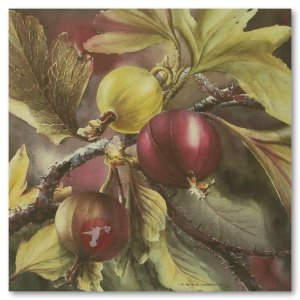 Hummingbird Gallery Les-Weisbrich-Wild-Gooseberry-Ribes-Oxyacanthoides-Image Les Weisbrich <p>Flower Series<p>Limited Editions Currently Available