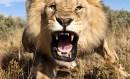 خوجی نے شیر کا شکار کیا