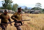 آسام میں ہاتھیوں اور انسانوں کا جنگلات کی 'ملکیت' پر جھگڑا