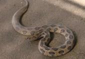نواز شریف کی پیشی پر نیب عدالت میں سانپ نکل آیا