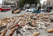 کراچی میں کھینچی گئی تصویر نے روس میں طوفان کیوں برپا کر دیا؟