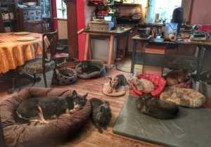 Einige der Hunde auf dem Tierschutzhof Vierpfötchen im warmen Wohnzimmer in Rokitno.