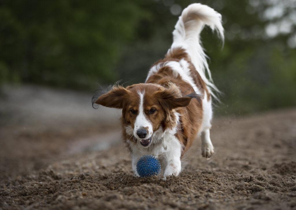 Actionbild Hundefotografie