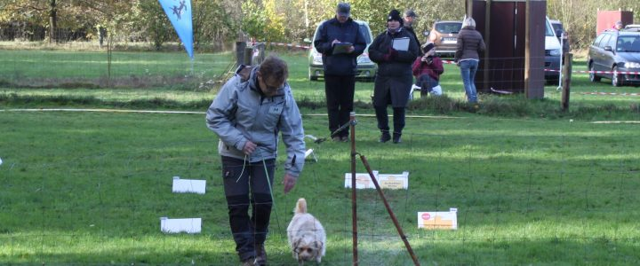 Rally Obedience Turnier