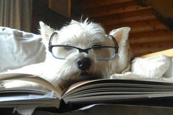 Hundesprog 2