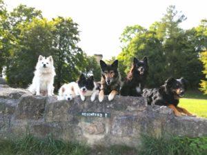 Die Pfoten-Pfad-Hunde in Tecklenburg