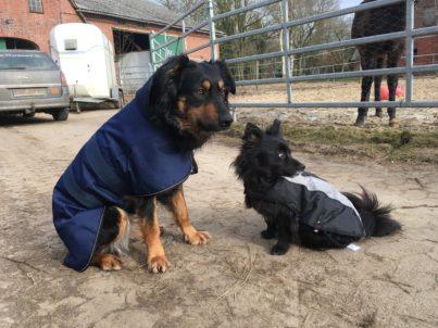 Hunde im Mantel