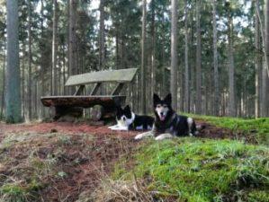 Im Rüstjer Forst in Helmste