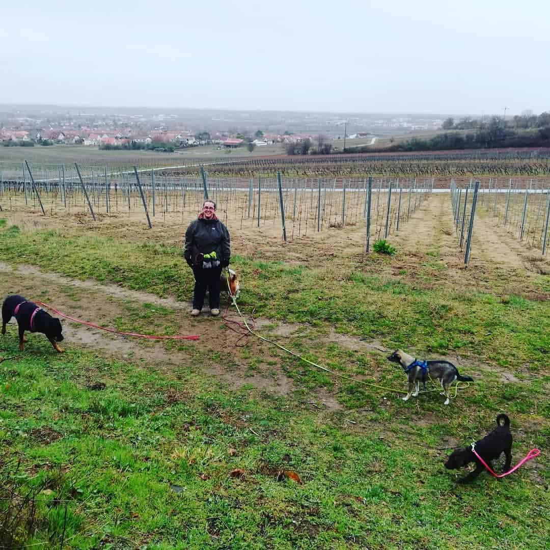 Adelia Rentschler LuDogs Ludwigshafen Hundebetreuung Dogwalking Dogwalker werden Ausbildung Sanny's Dogwalker Ausbildung Weiterbildung Tagesbetreuung Neustart Selbstständigkeit