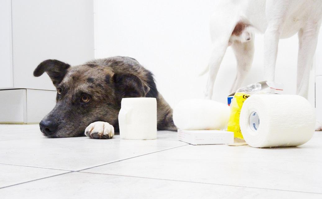 22. Jänner: Erste Hilfe beim Hund