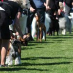 Nordic Dog Show