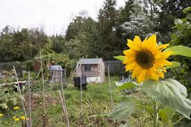 Hungerford Arcade Stuart Article Allotment June 2016