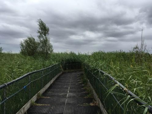 RSPB Newport Wetlands