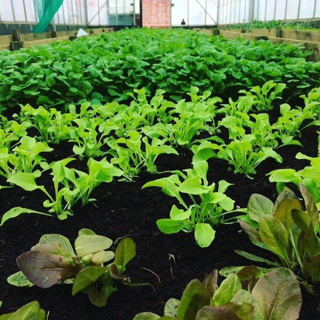 Cardiff Salad Garden