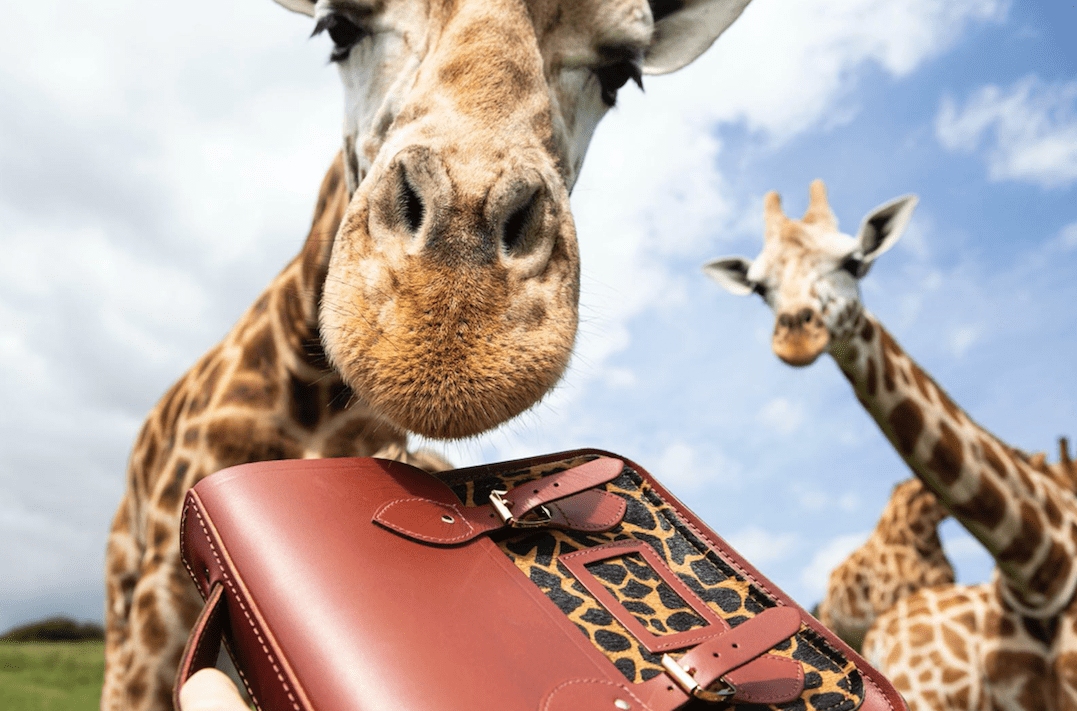 Handbags that help: Cambridge Satchel Co's new line will help save endangered animals