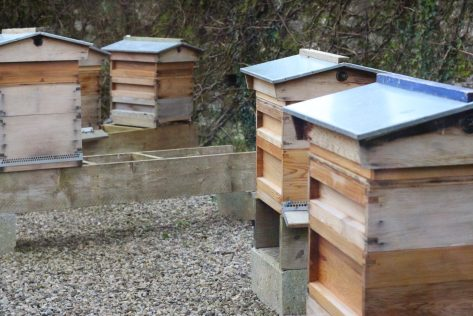 Bee Hives at the National Botanic Garden
