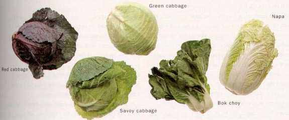 Cabbages Bok Choy Green Cabbage Napa