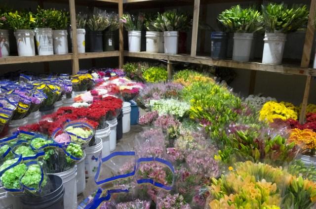 carlos.floral.4416