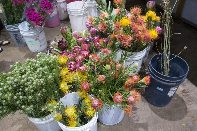 carlos.floral.4750