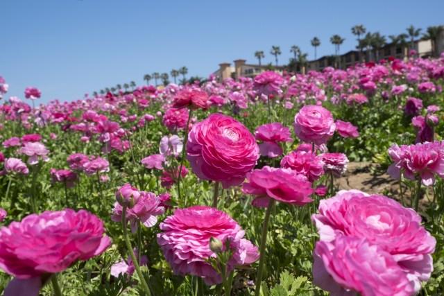 flower.fields.5844