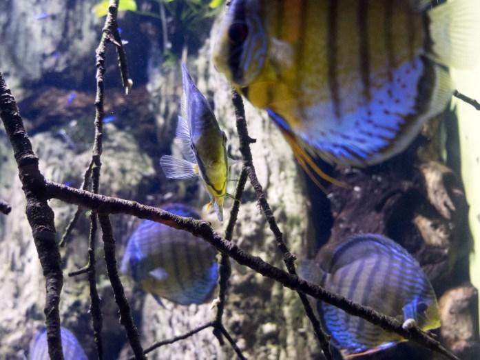 aquarium-ny2488