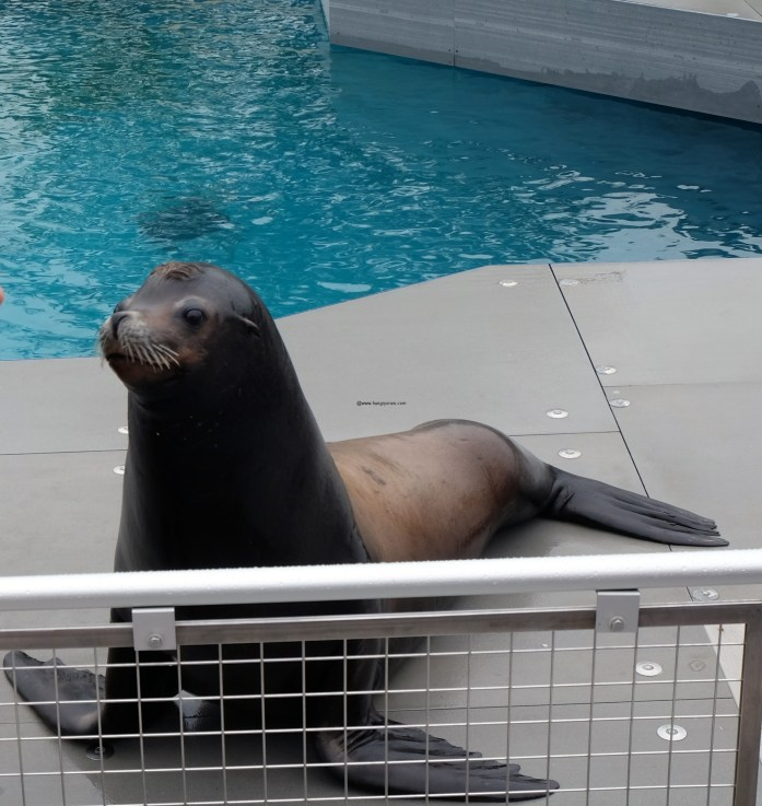 sea-lion-show-aq-ny2534-copy