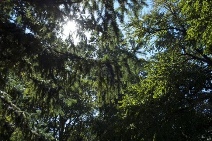 brooklyn-botanical-gardens2819