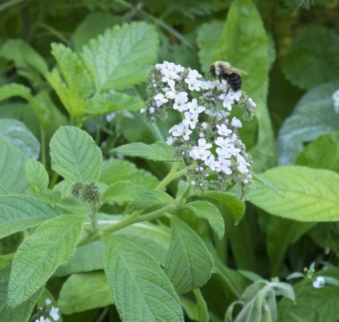 brooklyn-botanical-gardens2898