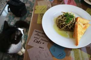 tabby-town-cat-cafe-hungrytravelduo