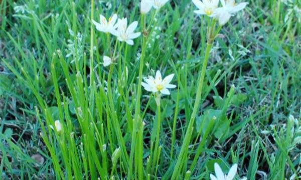 Spring Has Sprung: An Easy Free Printable Display Board