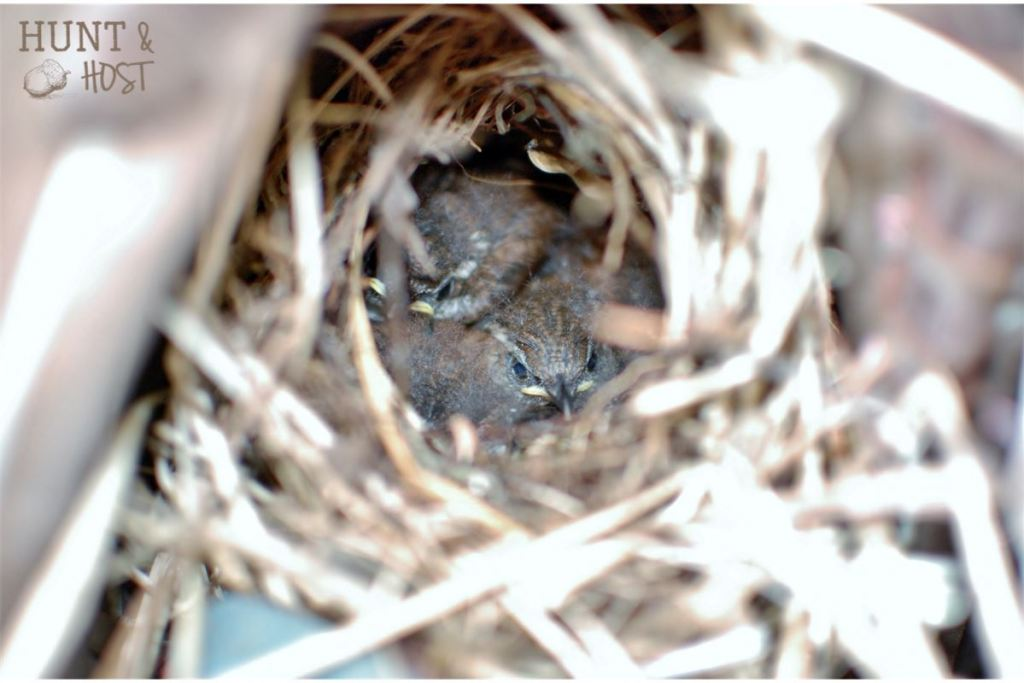 baseball glove nest