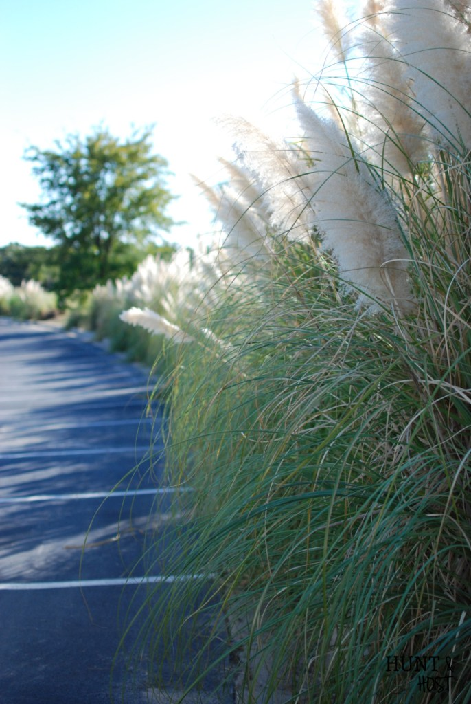pampas grass arrangement huntandhost.net