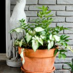 6 tips for successful container gardening. Want your patio to look straight out of a magazine? These tips will have you fixed up with realistic outcomes for your potted plants in no time!